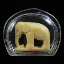ช้าง งาเเกะ วัดโพธิ์สัมพันธ์ ชลบุรี