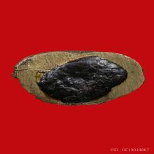 พระชัยวัฒน์รุ่นแรก พระอธิการพลาย วัดมะขาม